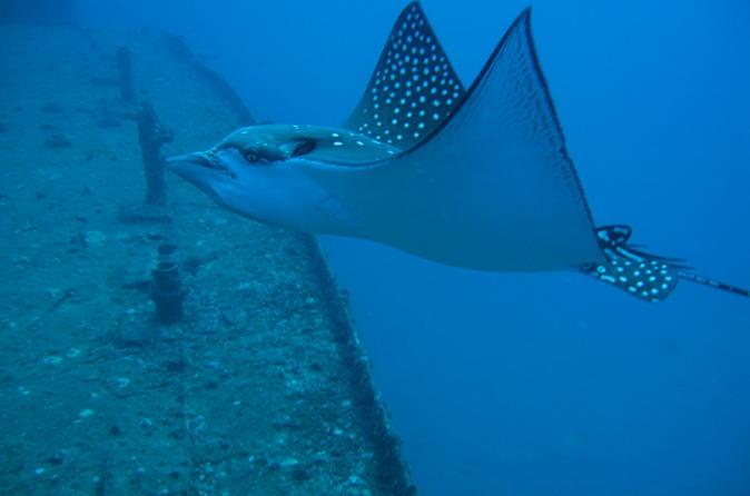 Two Tank Certified Wreck SCUBA Diving From Waikiki