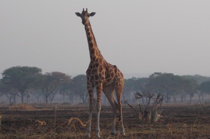 1-Day Trip to Nairobi National Park