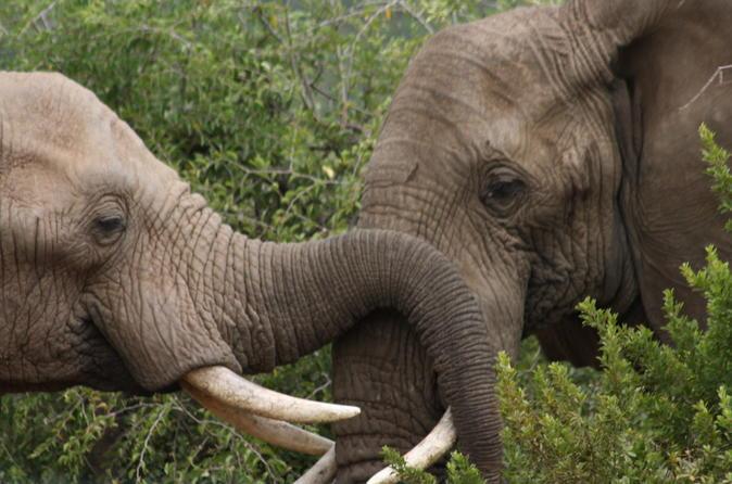 Parque Nacional de Pilanesberg saindo de Joanesburgo