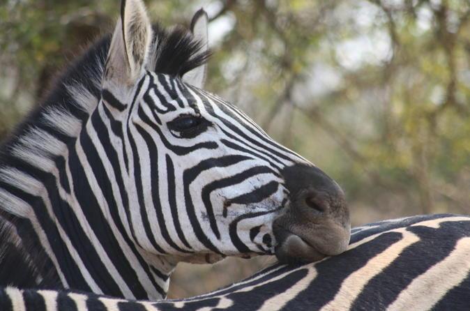 Private Tour: 2-Day Chalet Kruger Park Safari from Johannesburg