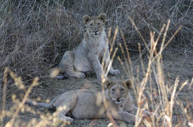 Private Tour: 2-Day Tented Pilanesberg safari from Johannesburg