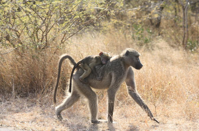 Private Tour: 4-Day Chalet Pilanesberg Safari from Johannesburg