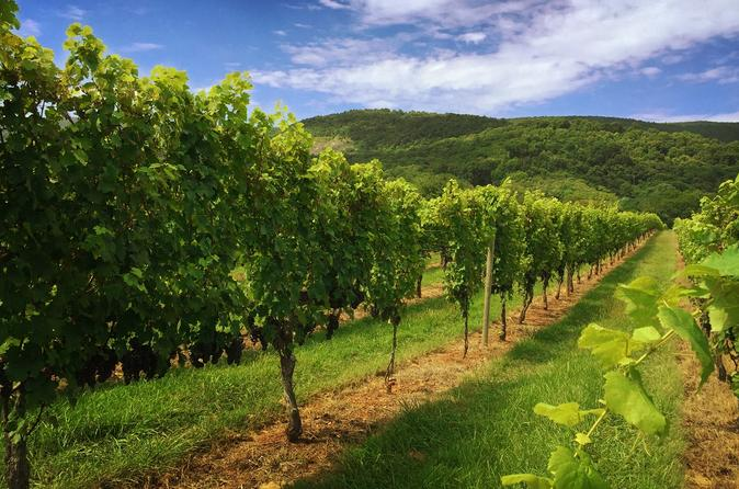 Weekday Virginia Private Custom Wine Tour from Charlottesville