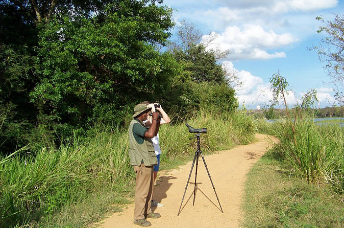 Private Guided Birdwatching In Habarana
