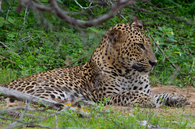 Yala Private Leopard Safari - Galle