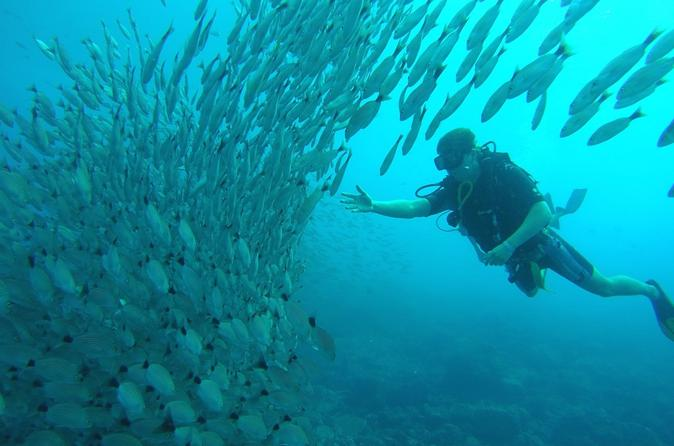 Scuba diving at playa hermosa coco and ocotal beach in playa hermosa 302175