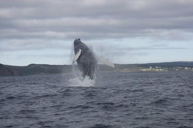 Whale-Watching Marine Wildlife Excursion by Zodiac Boat