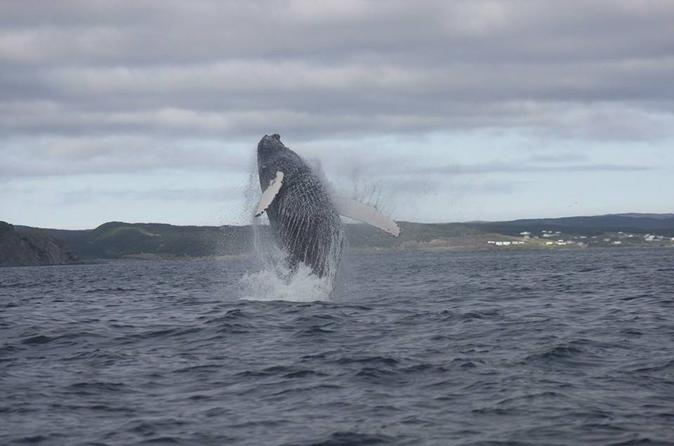Whale Watching Marine Wildlife Excursion by Zodiac