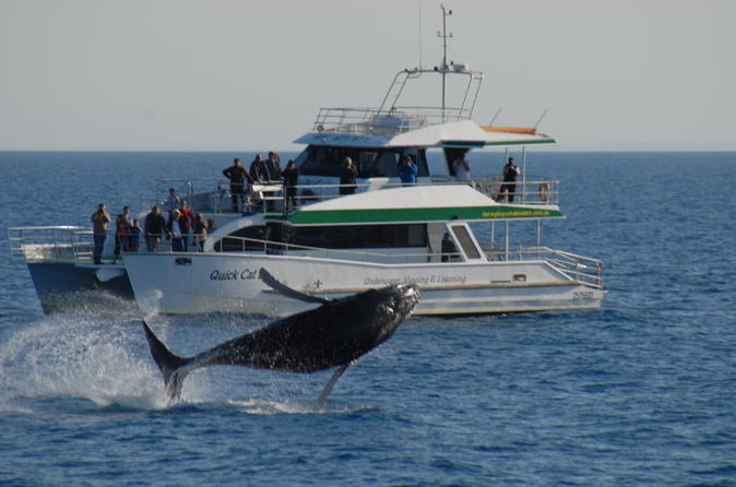 Morning or afternoon hervey bay whale watching cruise in hervey bay 216434