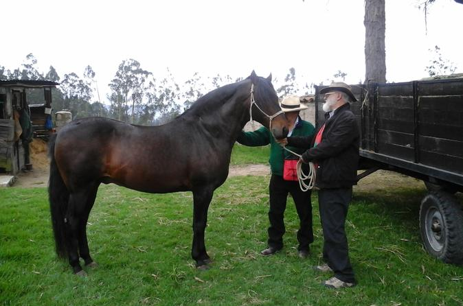 Private Horseback Riding Tour Including Lunch