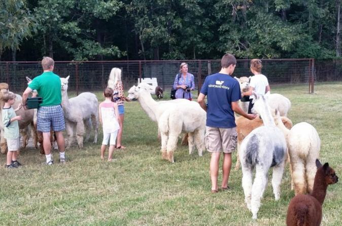 Alpaca farm tour in adairsville georgia in adairsville 452559
