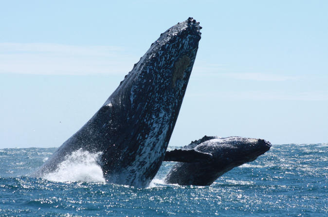 Up-Close Whale Watching Tour in Cabo San Lucas