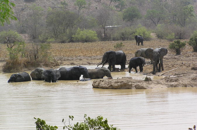 4 day wildlife safari in mole national park from accra in tamale 233240