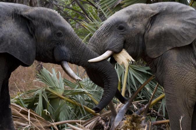 9 day best of african wildlife safari at mole and pendjari national in tamale 260568