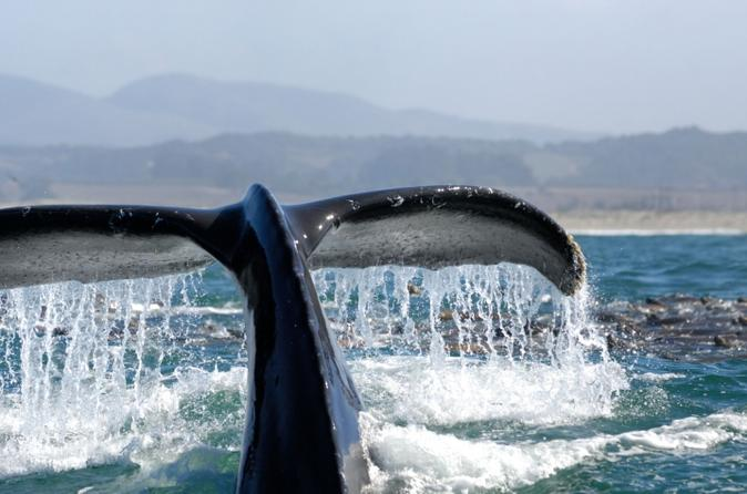 Whale Watching Day Cruise Santa Monica, Redondo, and Palos Verdes Bay