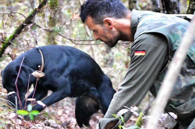 Siena Truffle-Hunting Experience