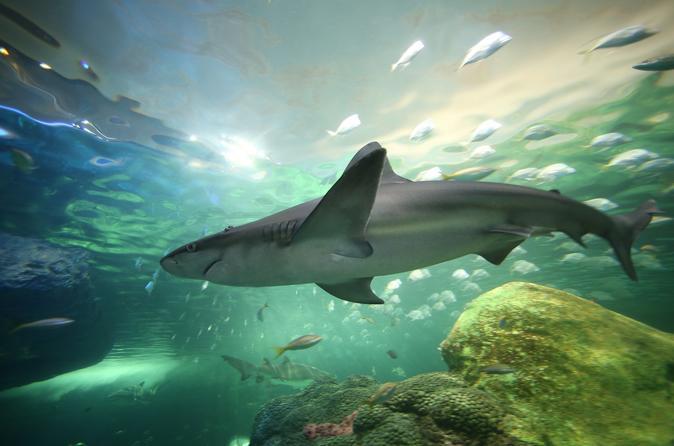 Ripley's Aquarium do Canadá, em Toronto