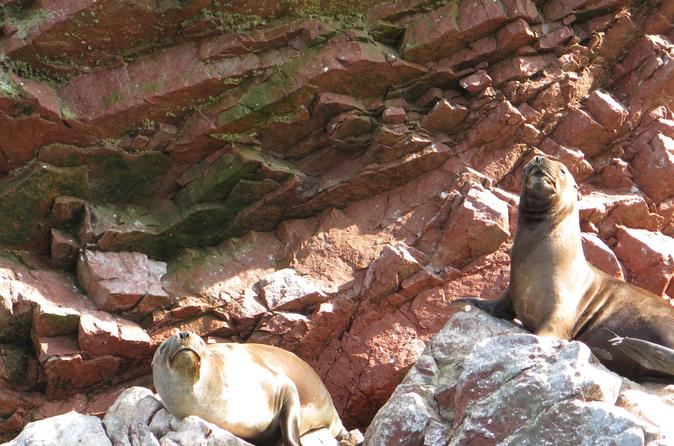 Ballestas Islands Full-Day Trip Including Paracas National Reserve