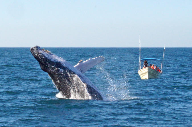 Whale Watching Expedition in Mazatlan