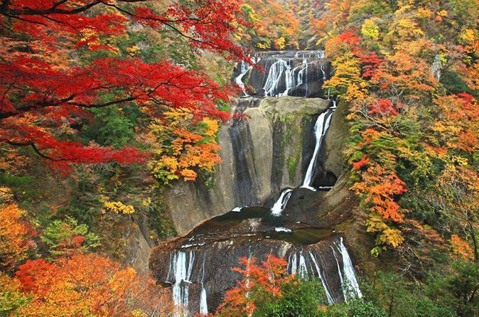 Autumnal Fukuroda Falls and Ashikaga Flower Park Illumination from Tokyo