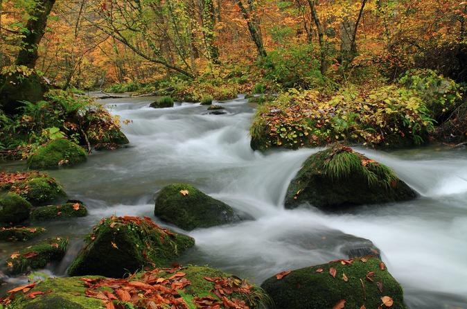 Beauty of Tohoku: 2-Days Autumn Leaves Tour of 8 Best Viewing Spots