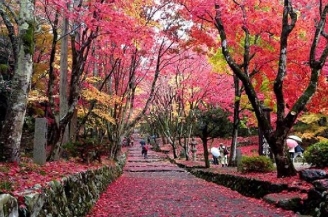 Biwako Valley and Keisoku-ji Temple Autumn Tour from Osaka