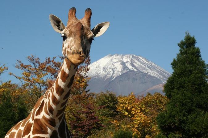 Day trip to Fuji Safari Park & Grape Picking from Tokyo