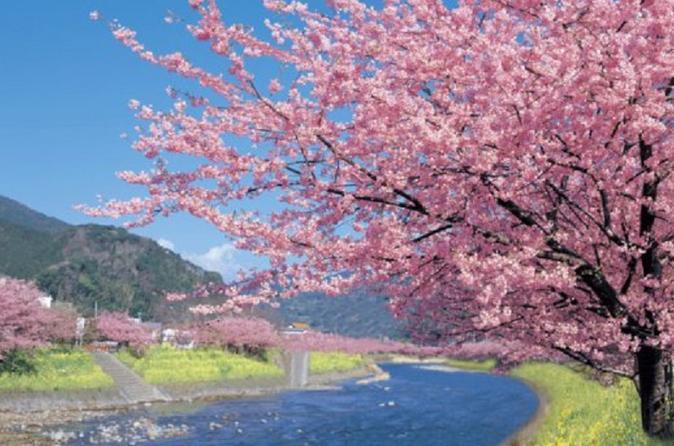 Kawazu-zakura Cherry Blossom Festival and Fruit Picking from Tokyo