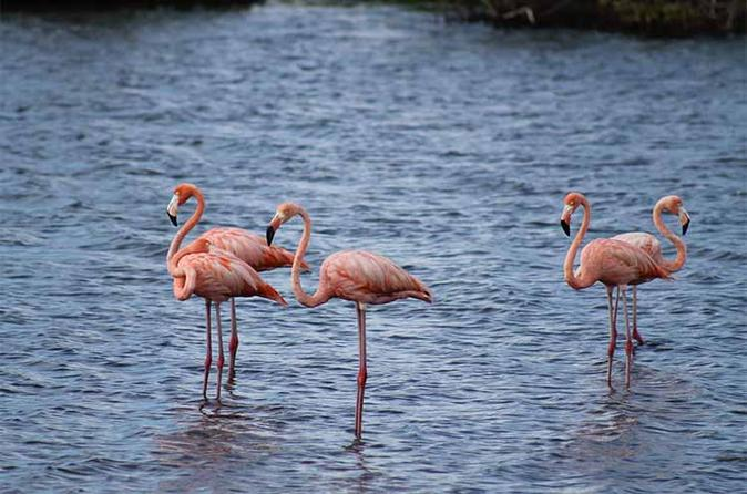 Lac Bay National Park Sightseeing Tour