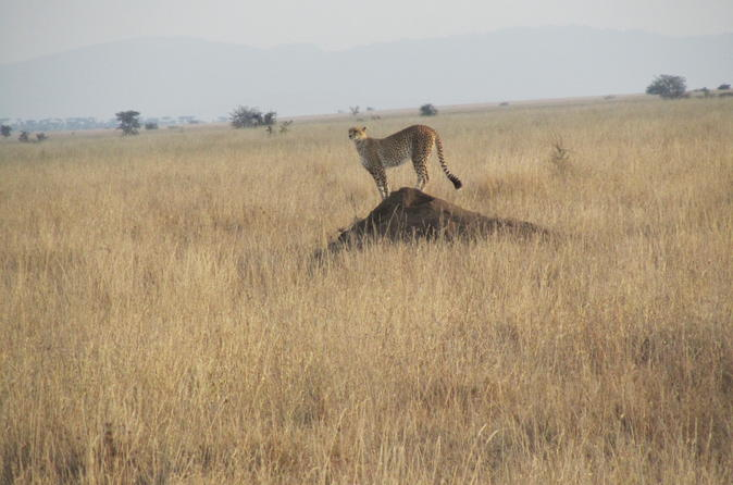 7-Day Family Tour: Northern Tanzania from Arusha