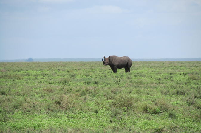 7-Day Private Tour Lake Manyara, Serengeti, Tarangire, Ngorongoro from Arusha