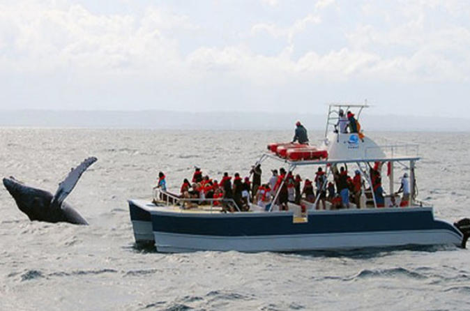 Samaná Whale Watching Excursion from Punta Cana