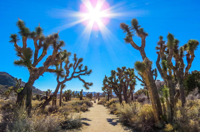 Joshua Tree National Park Customized Guided Hiking Tour
