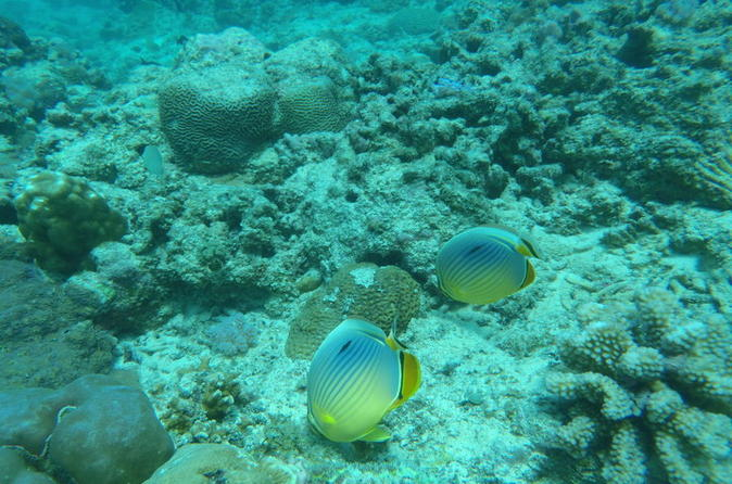 Undersea trekking from grand baie in rivi re du rempart 233523