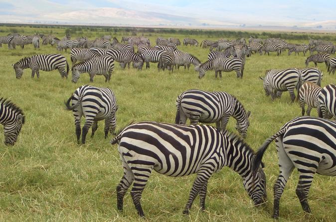 2 night masai mara safari from mombasa in mombasa 226114