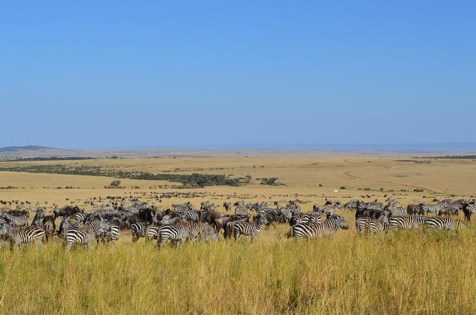6-Night Masai Mara National Reserve Tour: Nakuru National Parks, Amboseli and Tsavo from Nairobi