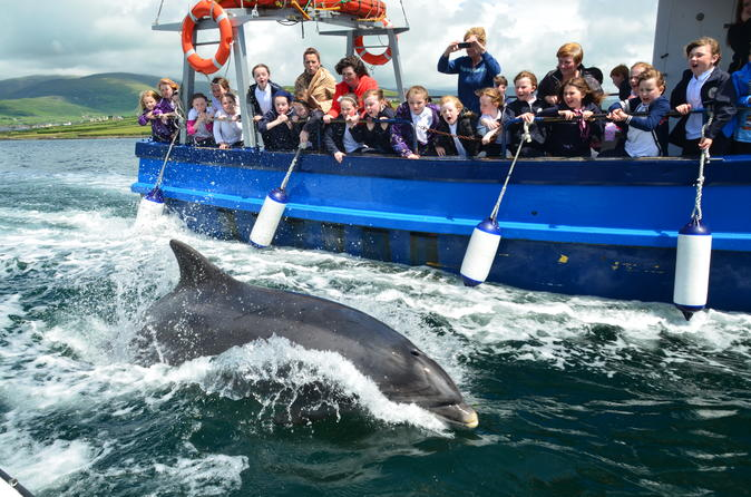 Dingle dolphin boat tour in dingle 296533