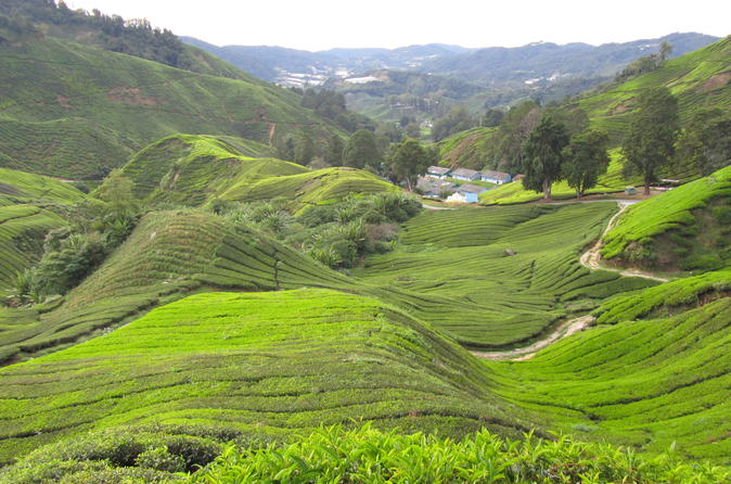 Private Transfer from Kuala Lumpur International Airport to Cameron Highlands