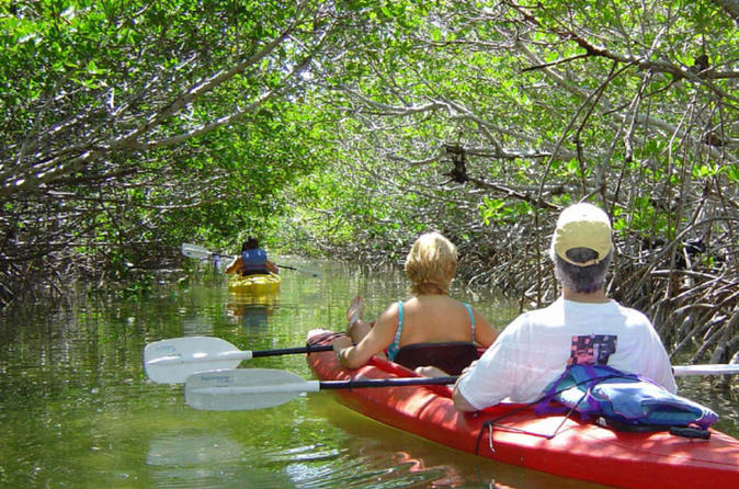 Key west mangrove kayak eco tour in key west 227344