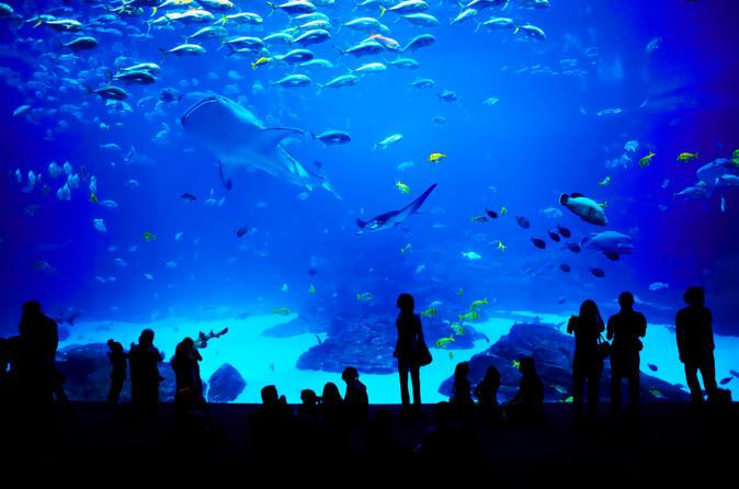 Entrada geral para Georgia Aquarium