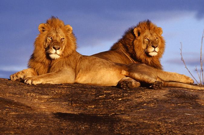 3-day Safari: Masai Mara