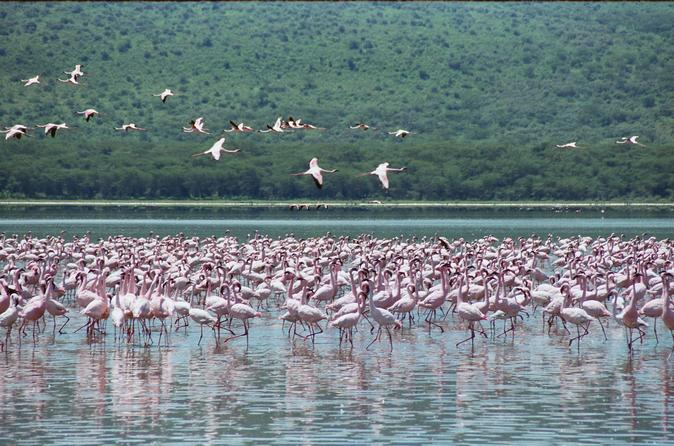 Lake nakuru national park day tour from nairobi in nairobi 229841