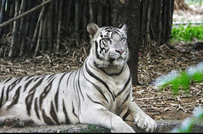 Private Full-Day Tour of Arignar Anna Zoological Park from Chennai