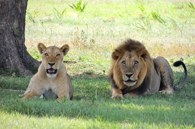 Full-Day Rhino and Lion Park Tour from Johannesburg