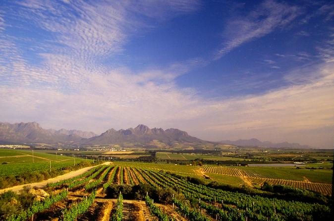 Half-Day Cape Winelands Private Tour from Cape Town