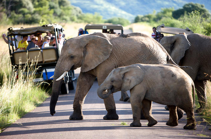 Pilanesberg Game Reserve Private Day Tour from Johannesburg