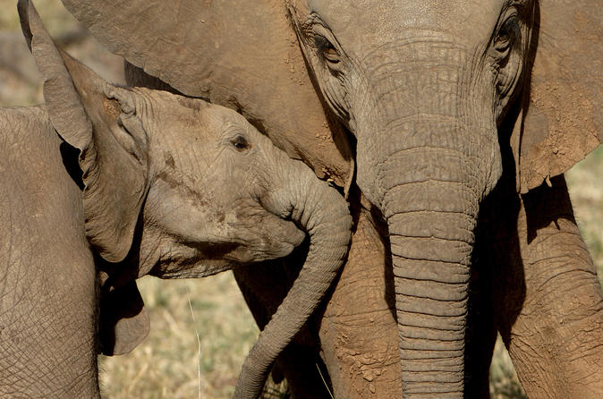 Private addo elephant national park day tour from port elizabeth in port elizabeth 246069