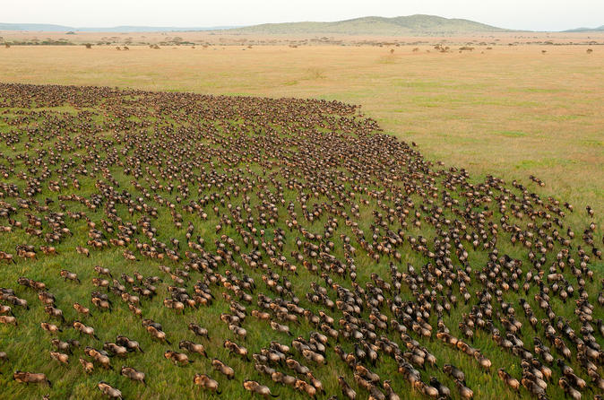 10 day great wildebeest migration safari guided tour through tanzania in arusha 303904