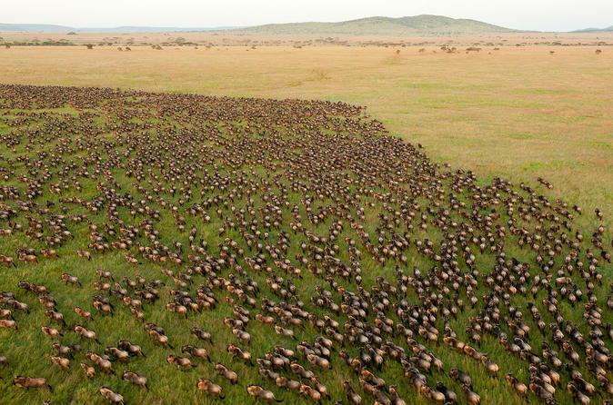 Arusha 10-Day Great Wildebeest Migration Safari Guided Tour through Tanzania Tanzania, Africa