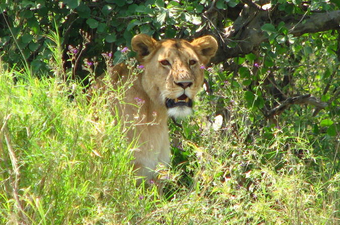 6-Day Safari in Tanzania's Northern Parks